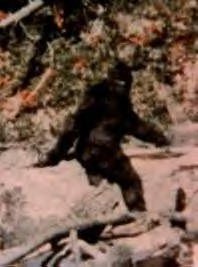 picture of a supposed Bigfoot creature
